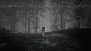 Bigfoot Vlk zachycen na kameru