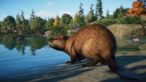 Planet Zoo bobr kanadský